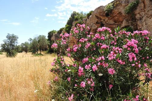 118 Cave di  Cusa, Campobello di Mazara (Sicily)