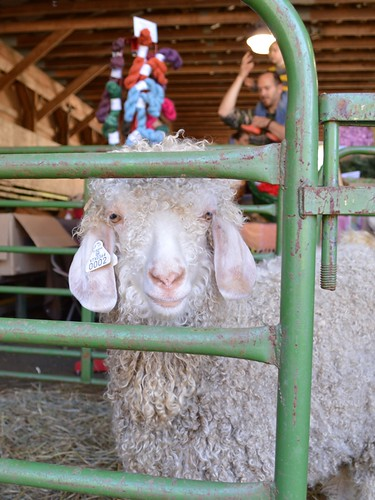 angora goats make mohair