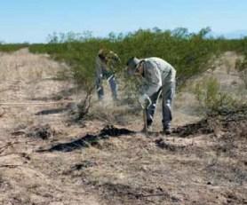 Abel Emma y Victor Puntano de Servicios de Yokavil realizan tareas de siembra de algarrobos.