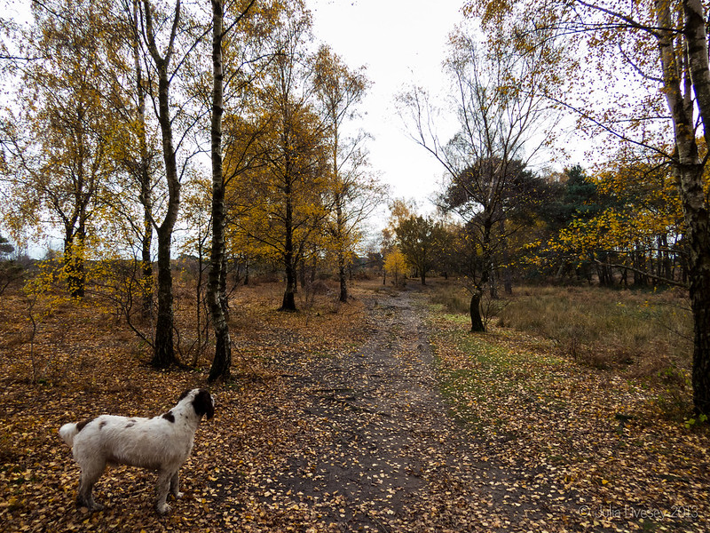 Max in the silver, now golden, birch grove