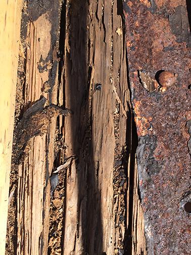 rotten wood deck margin