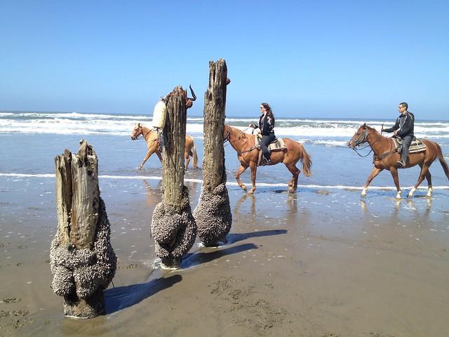 Horses at Fort Funston