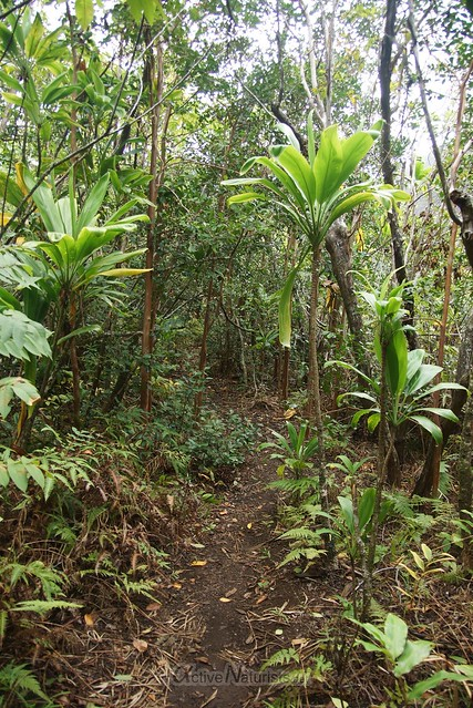 trail Iao needle 0001 Iao valley, Maui, Hawaii, USA