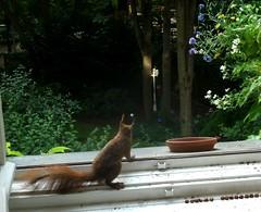 Eichhörnchen 4.4