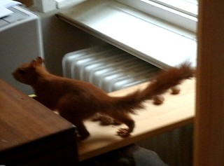 Eichhörnchen mag keine Grissinikekse 7