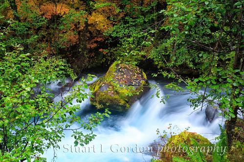 Autumn Foliage_WilliametteRiver_0102_03