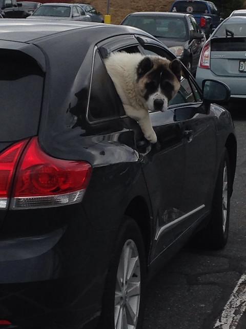 Parking lot dog