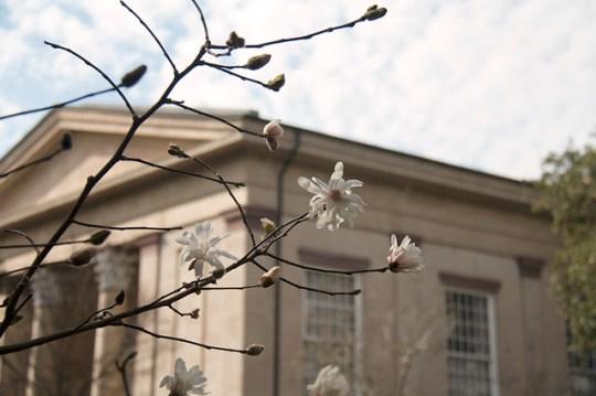 Telfair Square Winter Flowers