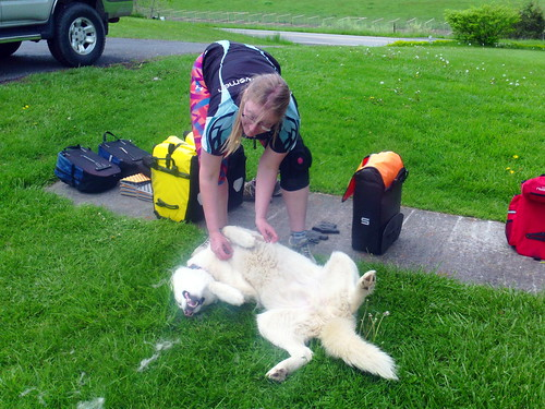 me petting dog
