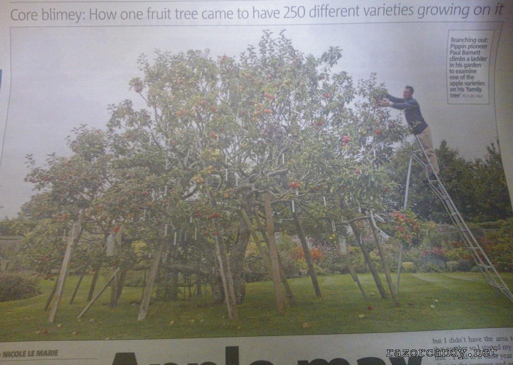 30-09-2013 Apple Tree Source