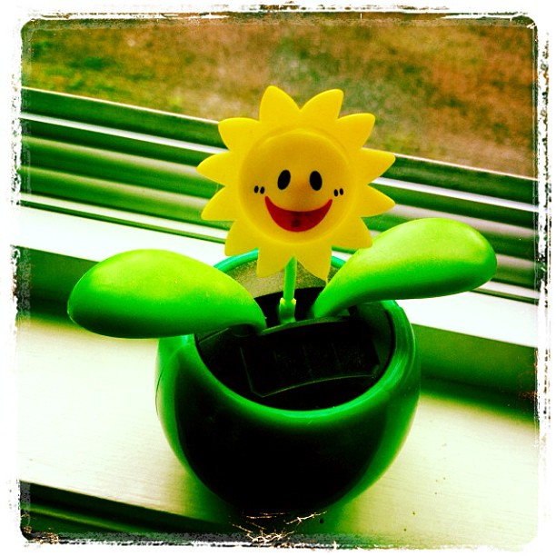 May 11 - a smile {the happy, smiling, solar flower that greets all visitors to our home. It waves when the sun shines} #fmsphotoaday #smile