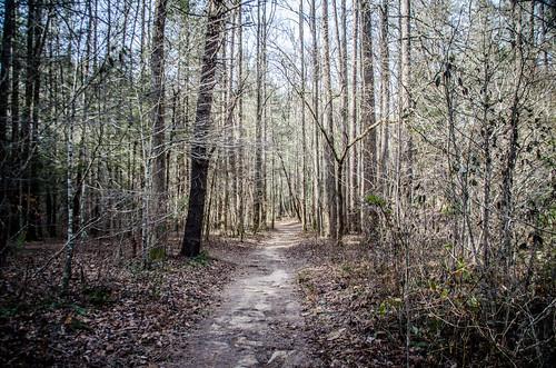 Brasstown Falls Trail