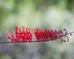 Daintree National Park - Australia