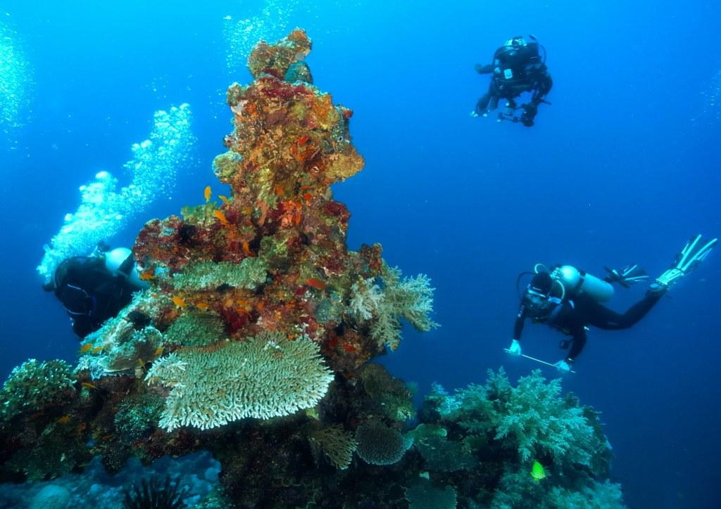 Cyclone Reef - Tufi PNG