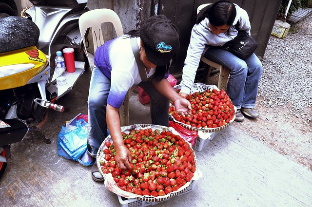 Strawberry Vendors