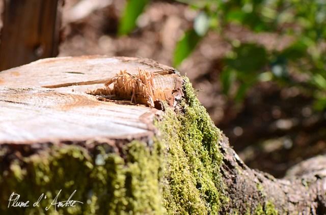 souche d'arbre
