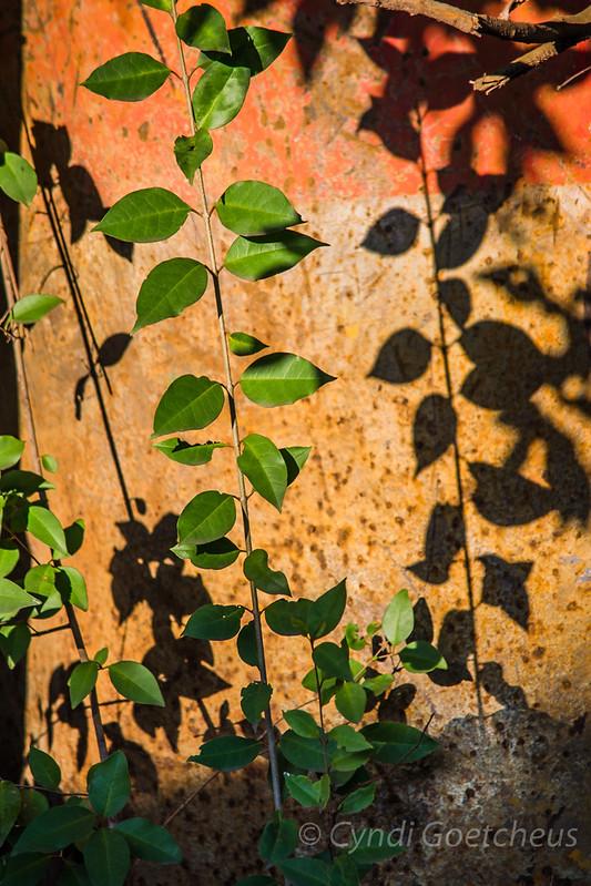 wabi sabi shadows