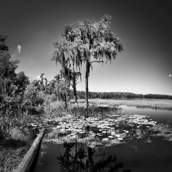 Lake Dixie shore