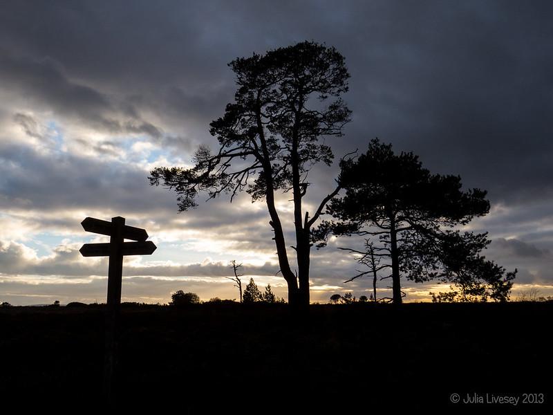 Silhouettes, Canford Heath