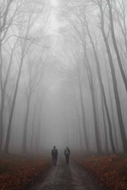 2-foggy hike