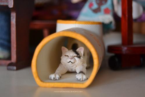 Cat by * Ronmiel *