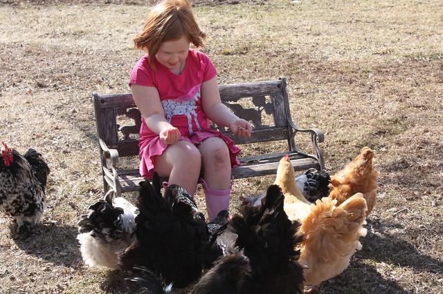 Feeding her flock