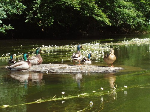 200806110033_kayak-trip-ducks