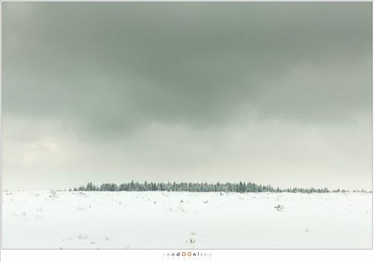 Een uitgestrekt, leeg landschap met aan de einder een geheimzinnig woud (de overeenkomst van het woud van Fangorn, gezien vanaf de vlakte van Rohan, komt in me op)