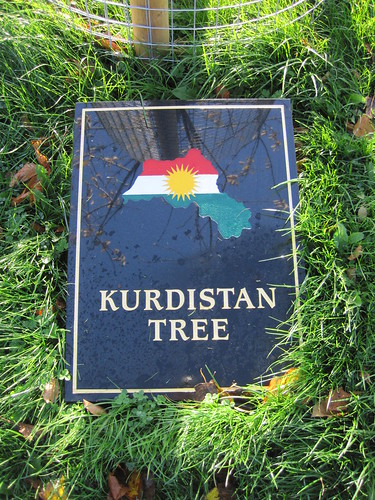 Kurdistan Tree, Middlesbrough