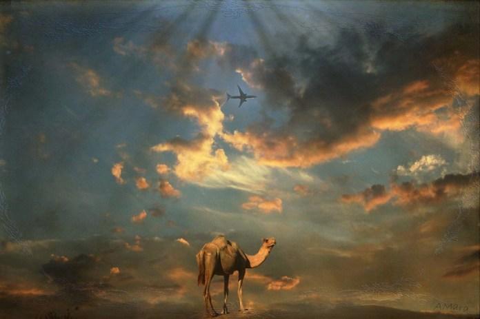 Camel - the ship of the desert
