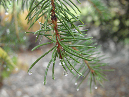 PineDrip