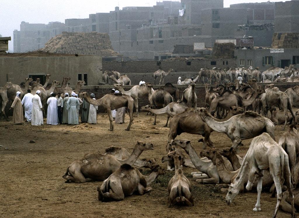 19. Mercado de camellos. Autor, National Geographic