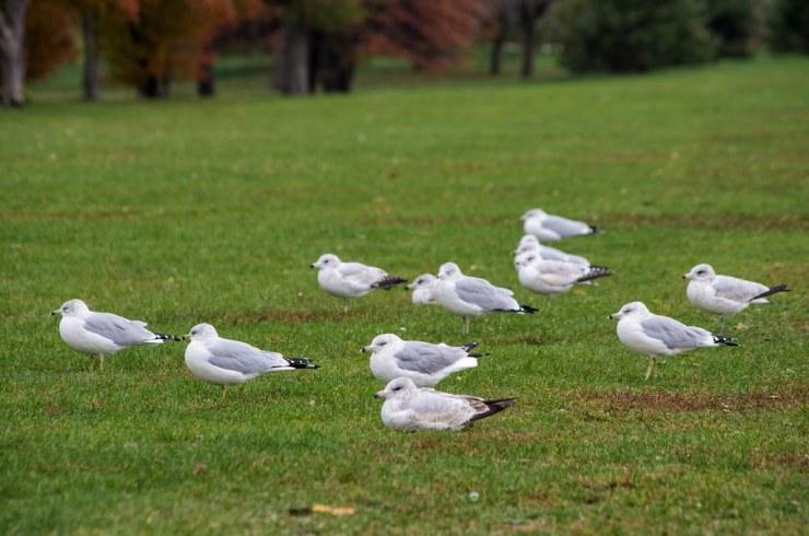 Cold Gulls