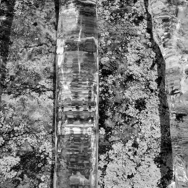 Icicle and lichen (RAW)