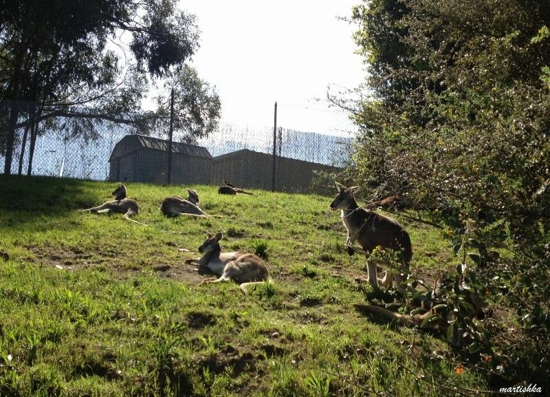 Oakland Zoo (45)