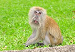 monkeys 27