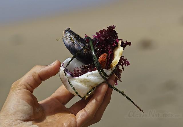 seafood 0000 4 Mile Beach, CA, USA