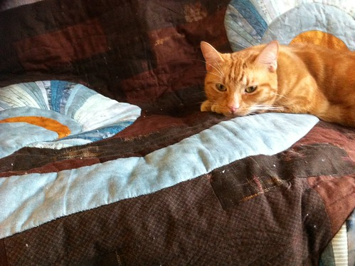 Pickle on the quilt