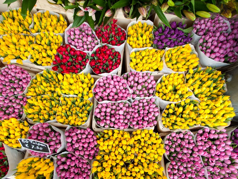 Tulip vendor, Flower Market, Amsterdam.