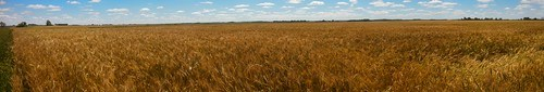 Emma: next stop wheat