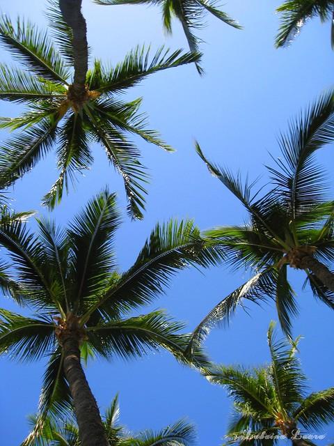 Palms May 11th ❤