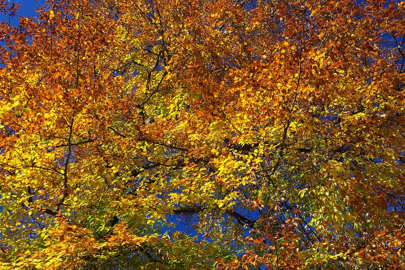 Autumn leaves. Striyskiy park. Lviv, Ukraine