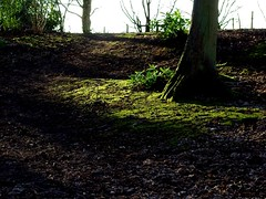 IMGP2089_Coombe Country Park - Light in the woods_By Craig
