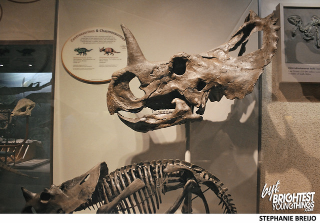 Smithsonian Dinosaur Exhibit Photos Brightest Young Things Stephanie Breijo7