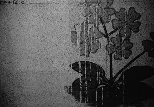 blossom in dark