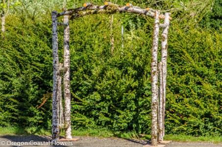 Birch Natural Wedding Arch-1