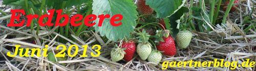 Garten-Koch-Event Juni 2013: Erdbeere [30.06.2013]