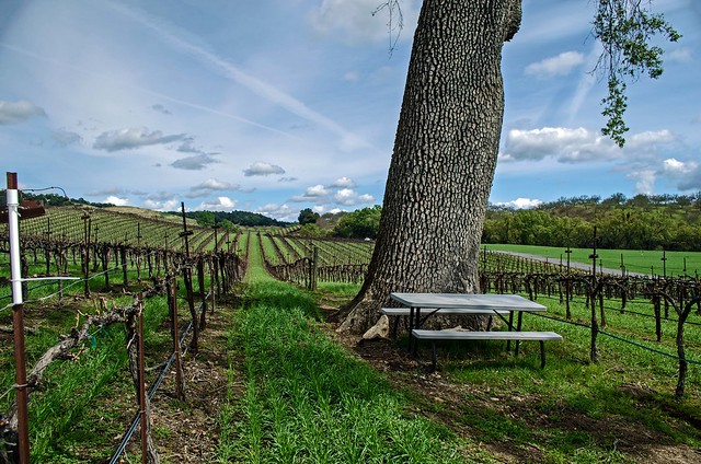 The single picnic table at the Zinfandel Picnic Area.