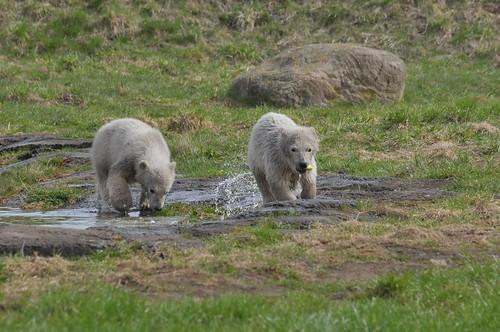 Ilkas Nachwuchs im Skandinavisk Dyrepark in Kolind