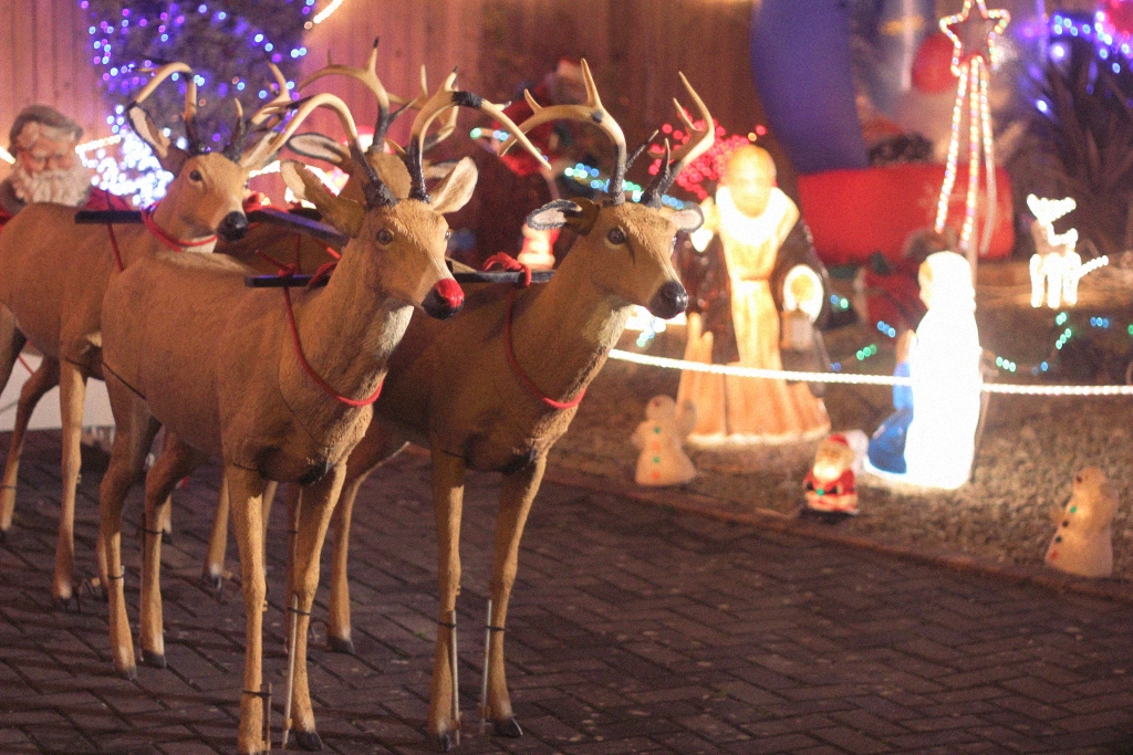 reindeers christmas decoration